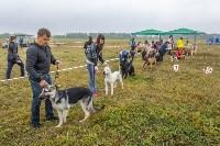 Международная выставка собак, Барсучок. 5.09.2015, Фото: 32