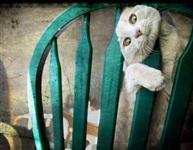 Кошки и собаки, проигравшие битву с мебелью, Фото: 29