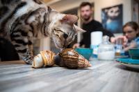 Экзотические животные в квартире, Фото: 63