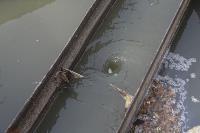 С заброшенных очистных канализация много лет сливается под заборы домов, Фото: 33