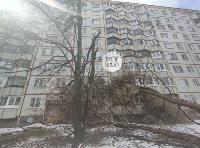 В Туле упавшее на девятиэтажку дерево повредило несколько балконов, Фото: 2