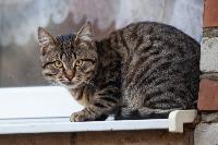 Тульские котики, Фото: 62
