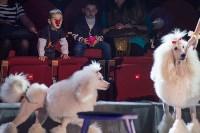 Тульский цирк, Фото: 31