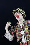 В Тульском цирке прошла премьера аква-шоу, Фото: 17