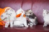 """Выставка """"Пряничные кошки"""". 15-16 августа 2015 года., Фото: 58"""
