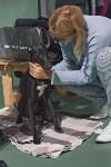Выставка собак в Туле 26.01, Фото: 59