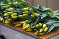 Тюльпаны , Фото: 19