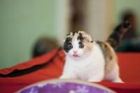 Международная выставка кошек. 16-17 апреля 2016 года, Фото: 14