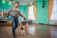 Выставка собак в Туле, 29.11.2015, Фото: 68