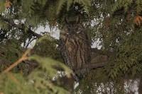 В Привокзальном районе поселились ушастые совы, Фото: 1