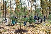 В Центральном парке Тулы появился сосновый бор «Слободы», Фото: 33