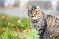 Тульские котики, Фото: 12