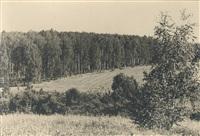 Толстой покупал березы на гонорар от «Войны и мира», Фото: 8