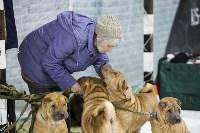 Выставка собак в Туле 14.04.19, Фото: 27