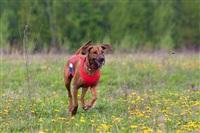 В Туле состоялись собачьи бега, Фото: 23