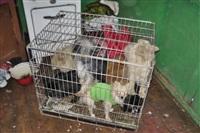 Похищенные собаки, Фото: 20