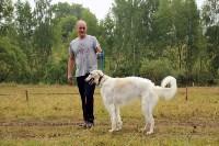 Выставка охотничьих собак под Тулой, Фото: 7