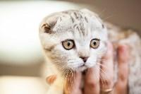 """Выставка """"Пряничные кошки"""". 15-16 августа 2015 года., Фото: 73"""