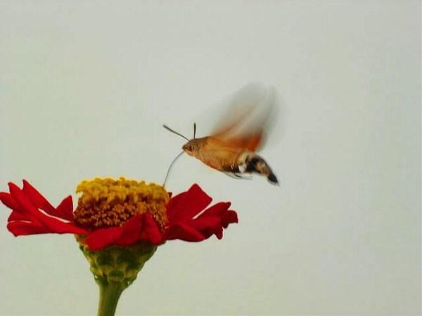 Почти колибри)