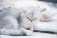Выставка кошек в МАКСИ, Фото: 12