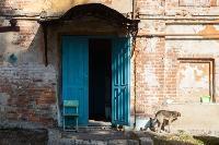 Дворняги, дворяне, двор-терьеры: 50 фото самых потрясающих уличных собак, Фото: 14