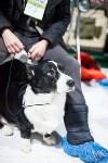 Выставка собак в Туле, Фото: 26
