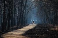Преобразования в Центральном парке, Фото: 1