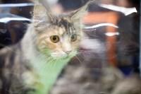 Выставка кошек. 4 и 5 апреля 2015 года в ГКЗ., Фото: 85