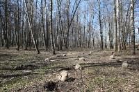 Посадка деревьев в Комсомольском парке, Фото: 2