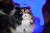 В Туле прошла выставка «Пряничные кошки» , Фото: 109