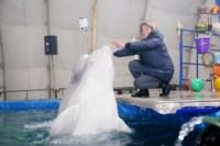 Дельфинарий в Туле, Фото: 22