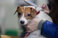 Выставка собак в Туле, Фото: 9