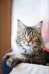 Международная выставка кошек. 16-17 апреля 2016 года, Фото: 10