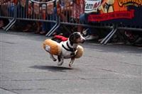Забег хот-догов, Фото: 7