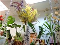 Магазин цветов, ИП Панова В.Е. , Фото: 3