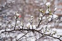 Мартовский снег в Туле, Фото: 99