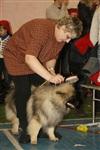 В Туле прошла всероссийская выставка собак, Фото: 26