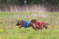 В Туле состоялись собачьи бега, Фото: 33