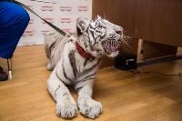 """Цирк """"Максимус"""" и тигрица в гостях у Myslo, Фото: 7"""