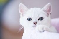 """Выставка """"Пряничные кошки"""". 15-16 августа 2015 года., Фото: 108"""