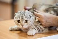 В Туле прошла выставка «Пряничные кошки» , Фото: 102