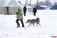 Куликово поле. Гонки на собачьих упряжках., Фото: 44