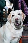 Выставка собак в Туле 26.01, Фото: 7