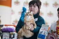В Туле прошла выставка «Пряничные кошки» , Фото: 55