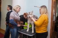 Всероссийская выставка собак 2017, Фото: 7