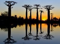 Баобабы на Мадагаскаре. Talia Friedman, Фото: 8