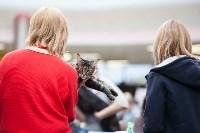 Выставка кошек в МАКСИ, Фото: 54