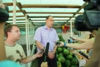 Рейд по незаконной продаже арбузов, Фото: 15