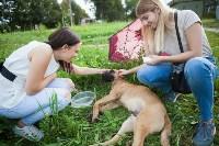 Спасение рядового пса, Фото: 3