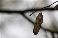 Осень, Фото: 13